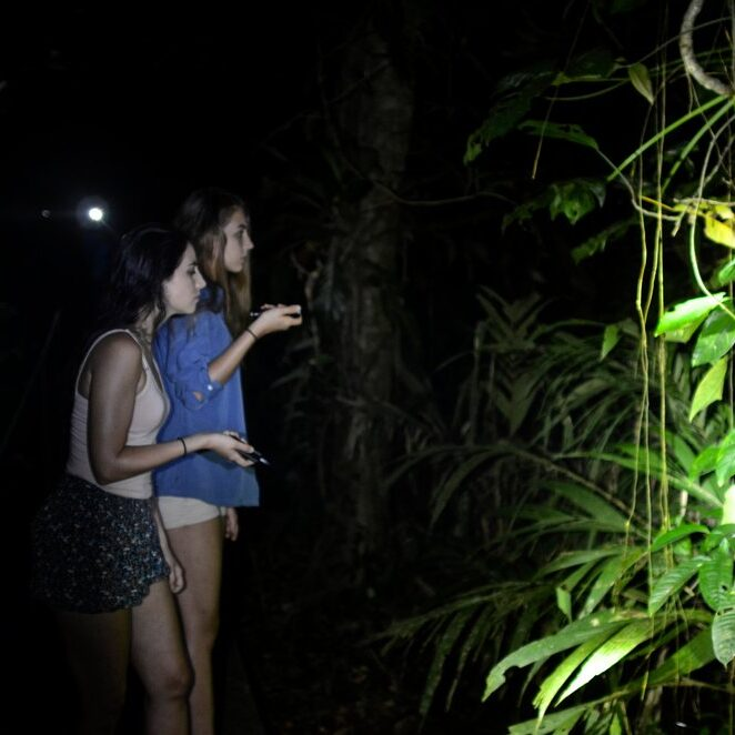 Tortuguero National Park  Rainforest night tour organized by Mawamba Lodge.
